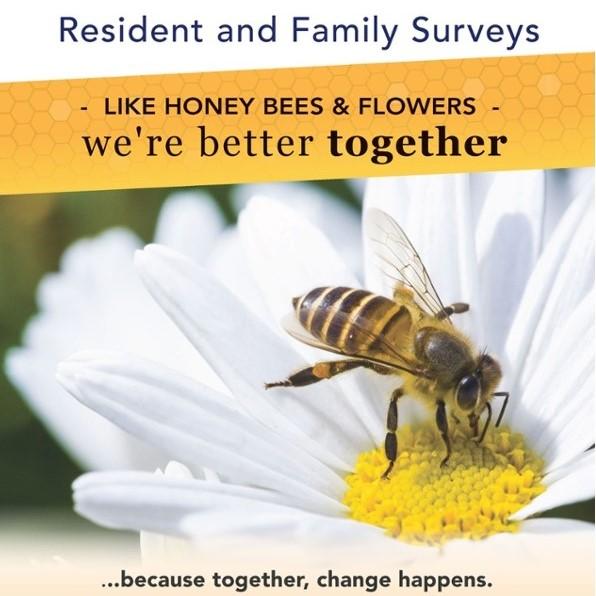 Survey Bees Flowers Square
